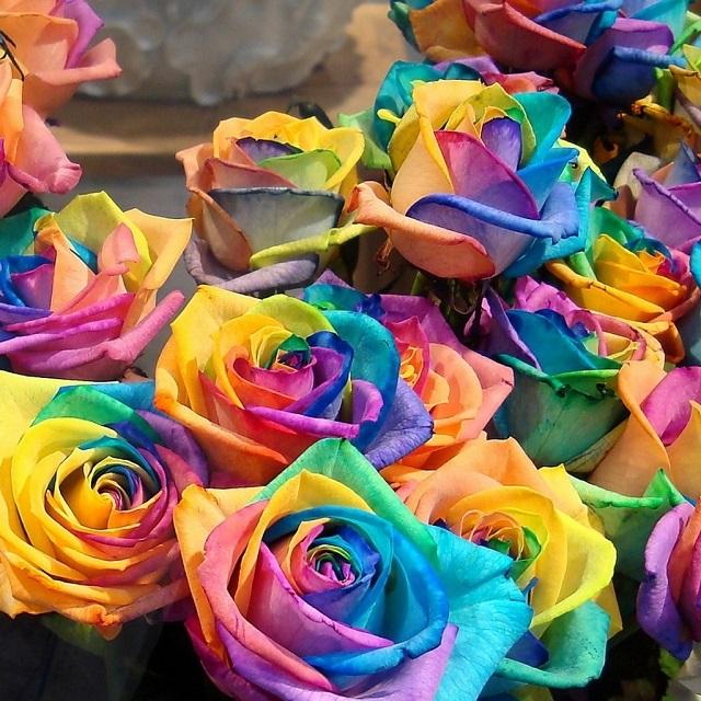 Rainbow Roses - DIY (3)