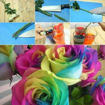 Rainbow Roses – DIY