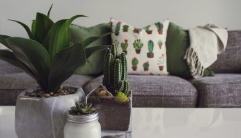 Plants-Into-Your-Homes-Decor