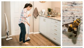 Clean-and-Pest-Free-Home