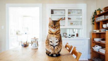 cat-furniture-1