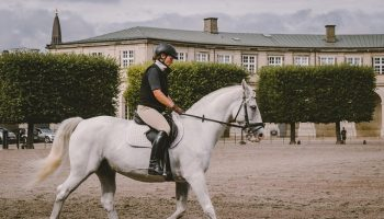 The-Ultimate-Equipment-Guide-To-Horse-Riding