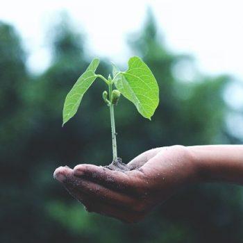 save-nature